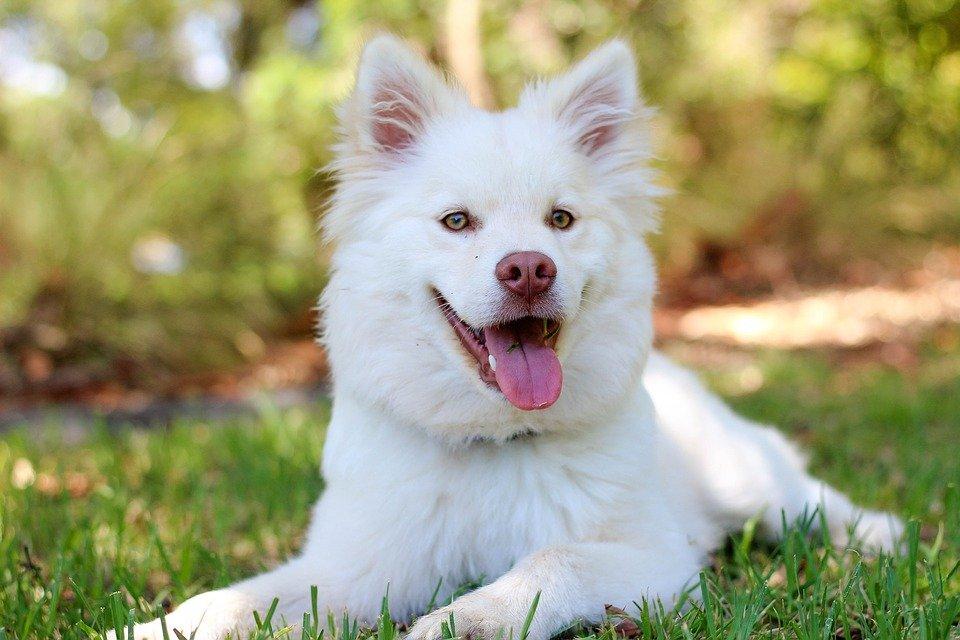 hund-schaut-in-kamera