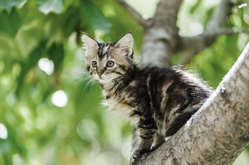 Mały kotek na gałęzi drzewa