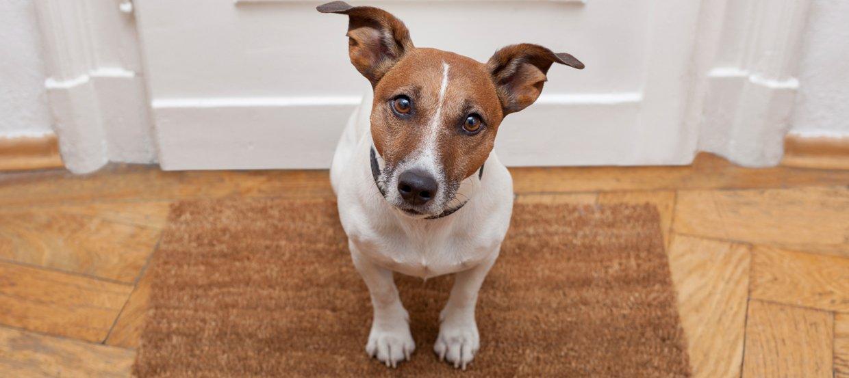 Koronawirus – Czy psy mogą zachorować lub zarażać?