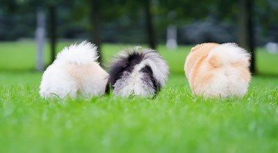 Probiotyk dla psa: Jak wzmocnić florę bakteryjną psich jelit?
