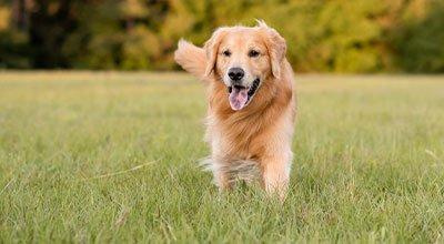 Problemy układu kostnego: co na stawy u psa?