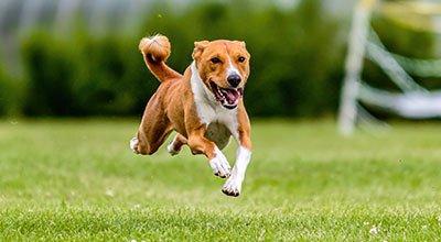 Kupy psa: co z nimi robić?