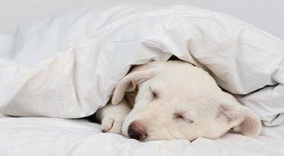Parwowiroza psów: objawy, leczenie i rokowania