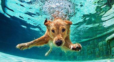 Pies w wodzie – jak nauczyć psa pływać?