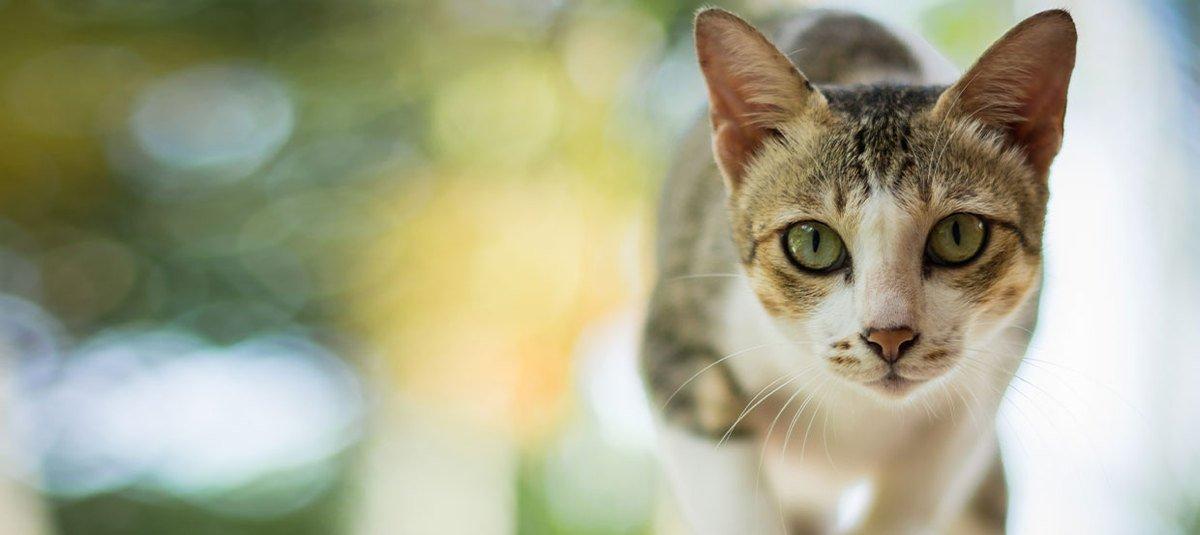 Kiedy kot zieje: jak możesz pomóc dyszącemu kotu?