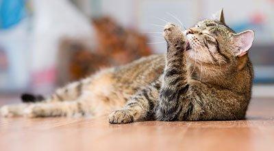 Pielęgnacja kota