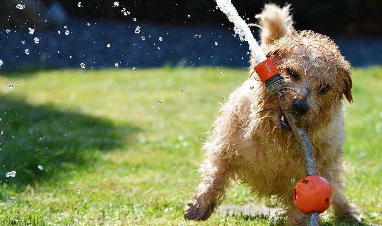 Świąd u psa – czym jest spowodowany i jakie są sposoby jego leczenia (które działają)