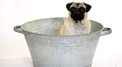 Jak i kiedy kąpać psa?