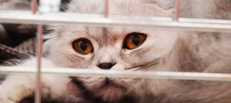 Adopcja kota: co warto wiedzieć?