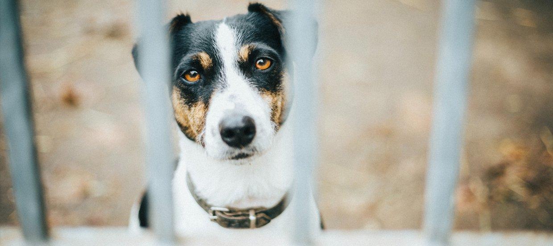 Adopcja psa ze schroniska: na czym polega?