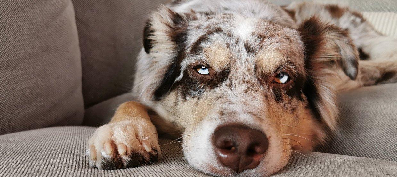 Choroby skóry u psa