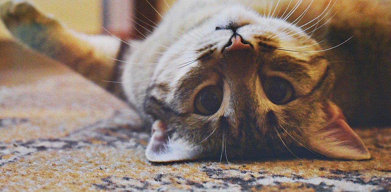 Choroby układu pokarmowego u kota