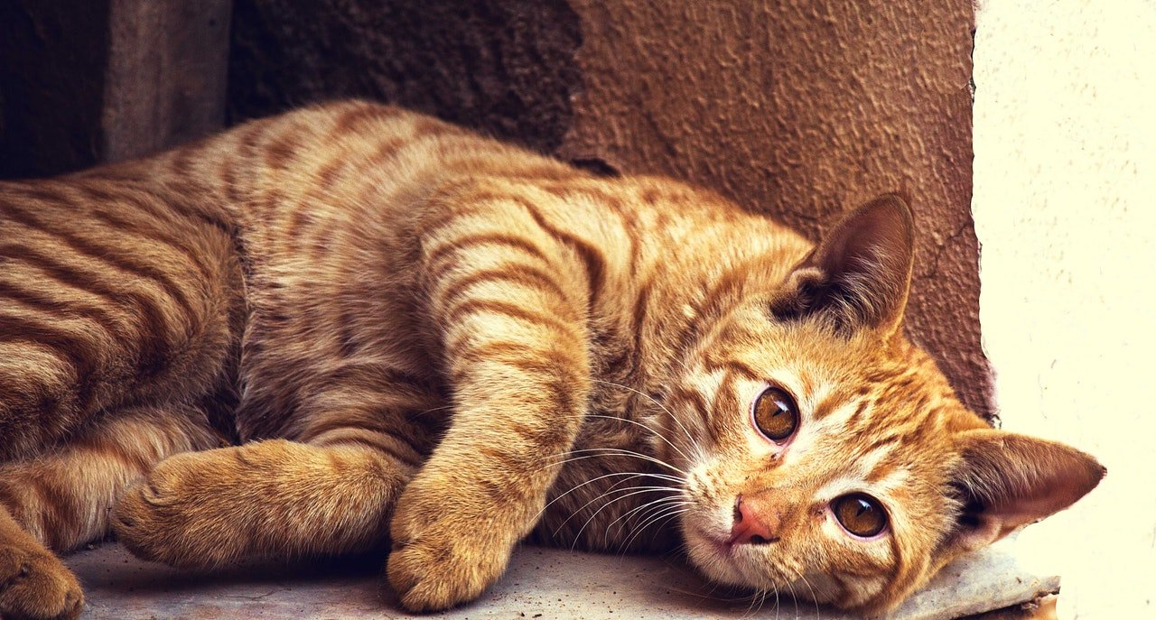 Choroby kotów – lista najczęściej występujących chorób