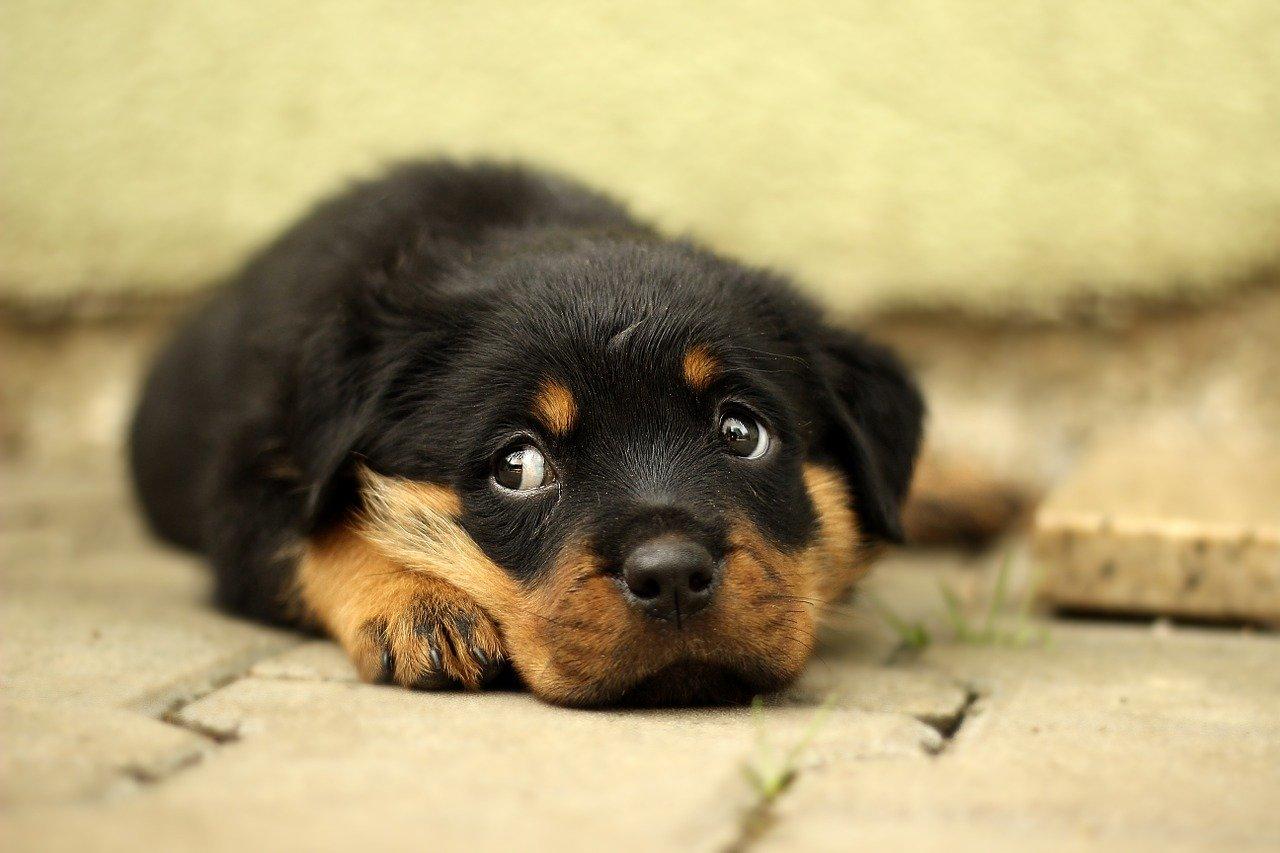 Rodzaje chorób u psów