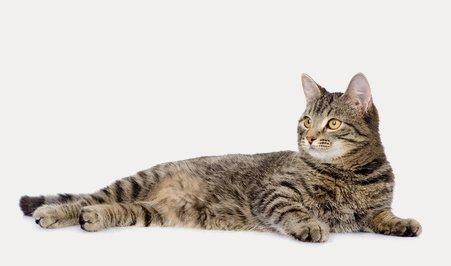 Choroby dolnych dróg moczowych u kotów