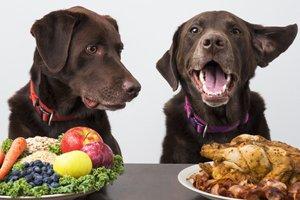 Dieta dla psa, czyli jaki wpływ ma odżywianie na zdrowie