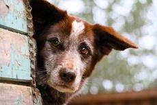 Pies uciekinier - jak rozwiązać ten problem?