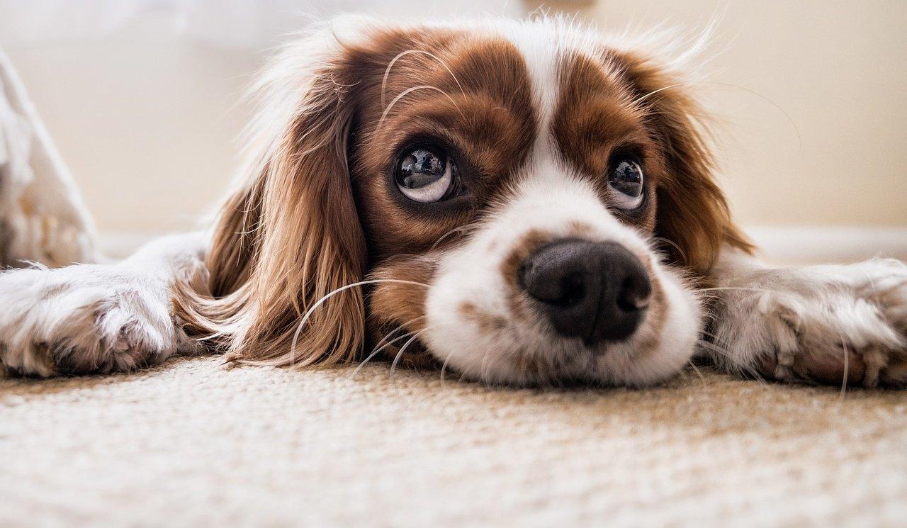 Kleszcz u Twojego Psa - Kompendium wiedzy