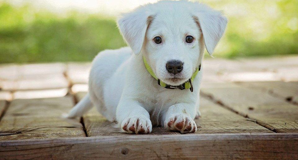 Obcinanie pazurów u psa: czym skracać i jak często?