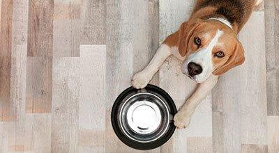 Ile razy dziennie karmić psa i o jakich porach?
