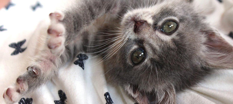 Żywienie kociąt: czym karmić małego kotka?