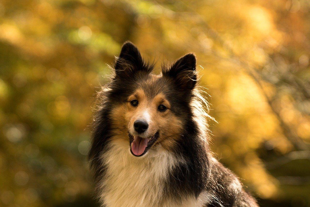 Nowy trend - bezzbożowa karma dla psów