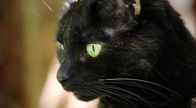 Twój kot kicha: przyczyny i możliwości leczenia