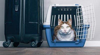 Wakacje z kotem: czy Twój mruczek to obieżyświat?