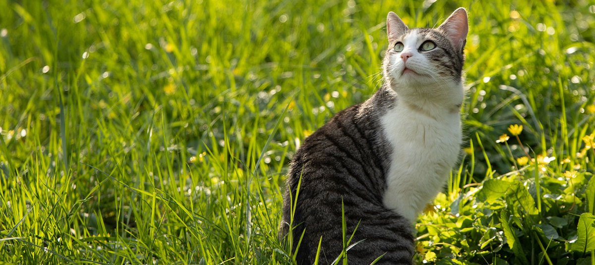 Porady dla kota na lato