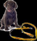 Wypadanie włosów u psa – linienie a pielęgnacja sierści