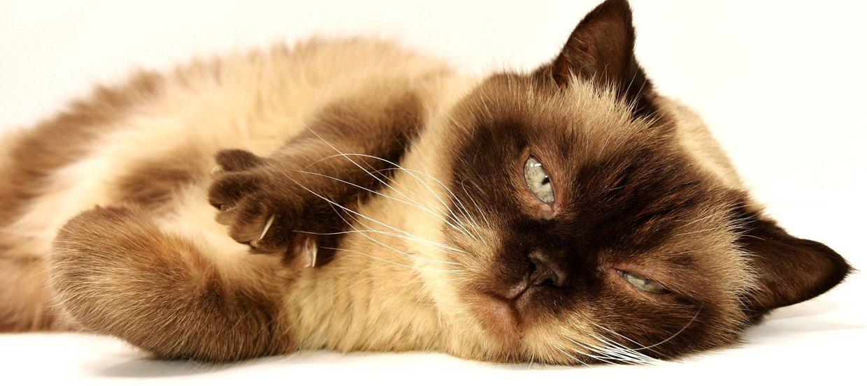 Choroby kotów: jak im zapobiegać i jak je leczyć?