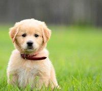 Jedzenie dla szczeniaka – wszystko, co musisz wiedzieć o prawidłowym żywieniu