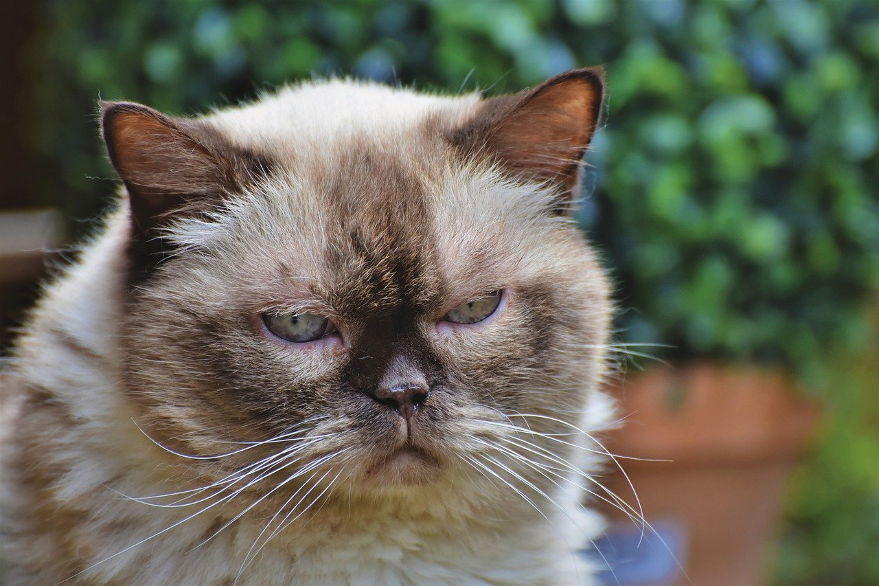 Otyłość u kota - czy Twój kot ma nadwagę?