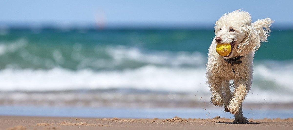 Nad morze z psem: plaża nie tylko dla ludzi