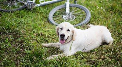 Pies na rowerze – o czym powinieneś pamiętać?