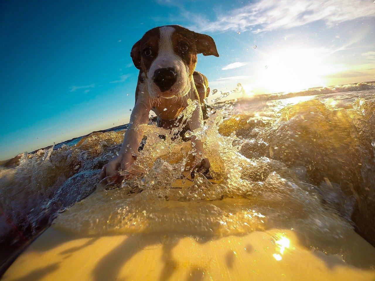 Wakacje z psem – jak najlepiej spędzić wolny czas ze swoim pupilem
