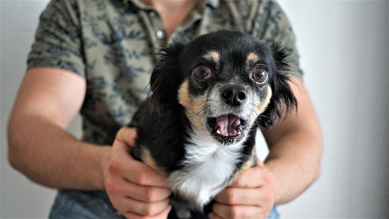 Sylwester z psem – jak się do niego przygotować?