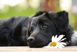 Wymioty i biegunka u psa – jak sobie z tym radzić?