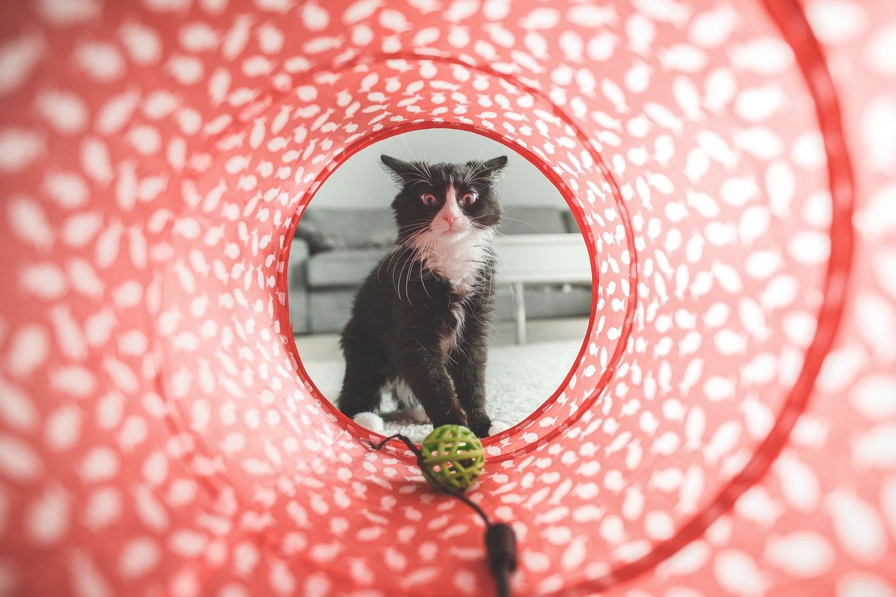 Sterylizacja u kota