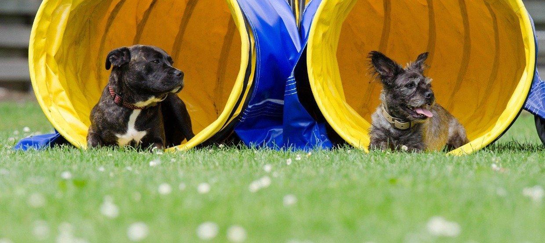 Czy szkoła dla psów to psi obowiązek?