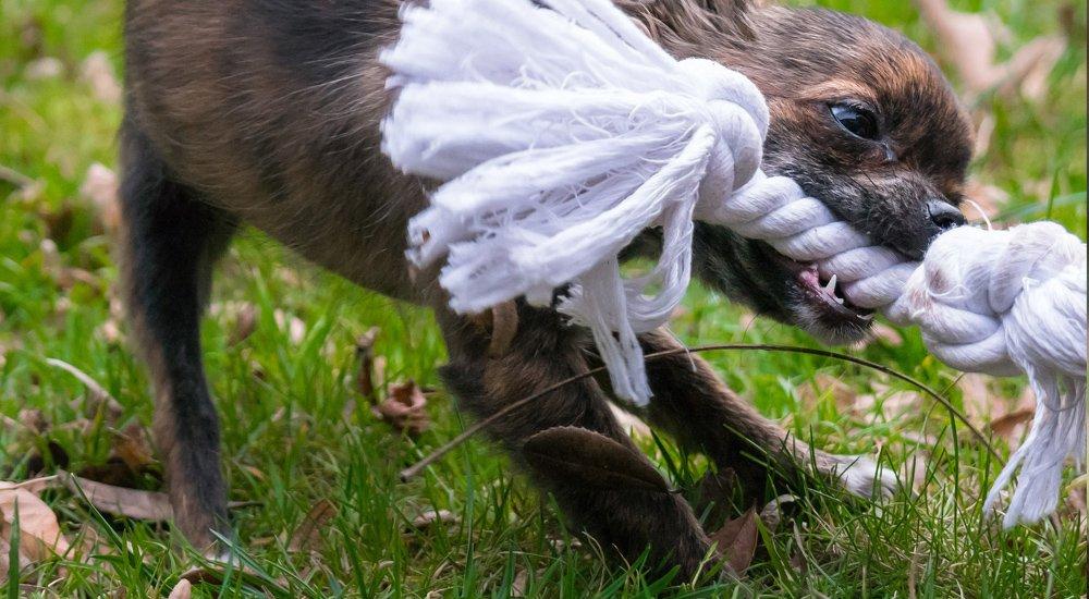 Wyprawka dla psa: 10 niezbędnych produktów z zielonej półki