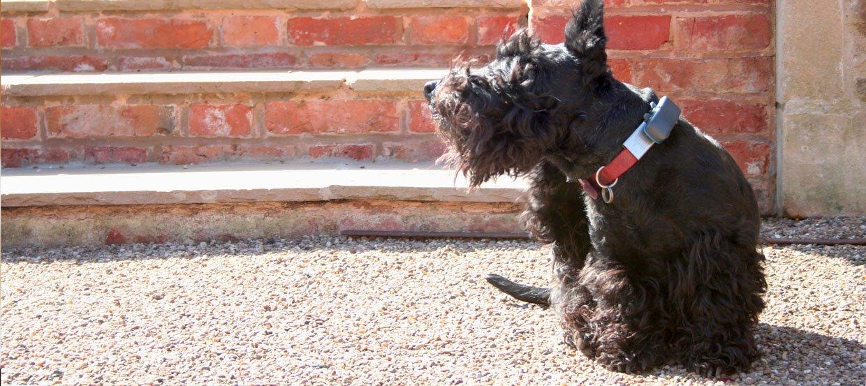 Zapalenie ucha u psa: objawy i leczenie