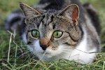Karma bezzbożowa dla kota