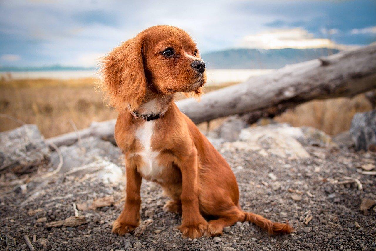 Karmienie psa, a opieka stomatologiczna