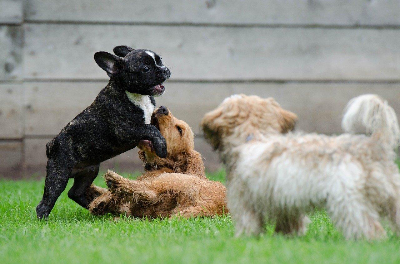 Karmienie szczeniaka - co powinien jeść mały pies?