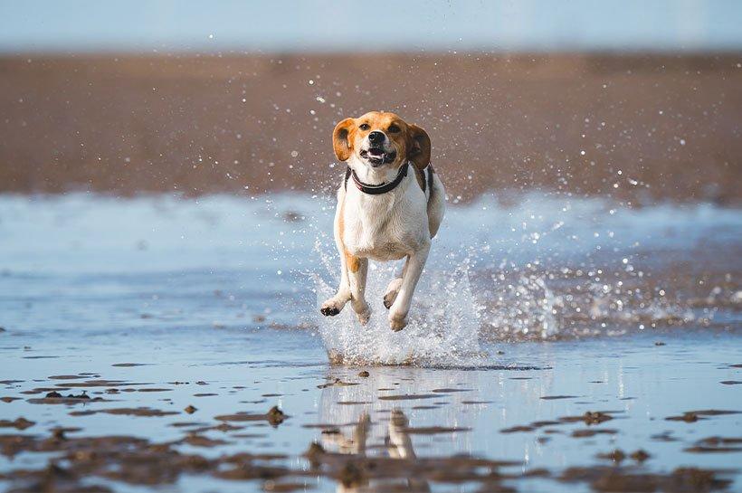 pies w płytkiej wodzie