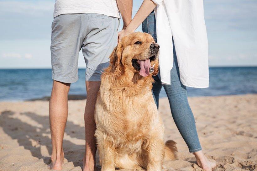 pies z wlaścicielami na plaży