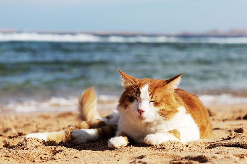 kot na plaży