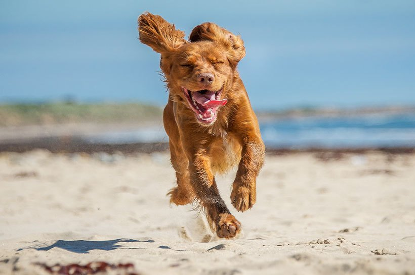 pies biegający po plaży