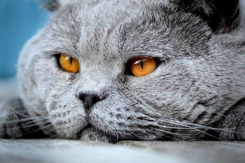 bezzbożowa karma dla kotów